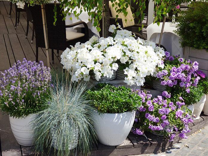 Jak wykorzystać ogród dla wypoczynku, zdrowia i urody?