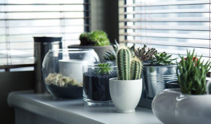 Rośliny do sypialni, których obecność pozwoli Ci lepiej spać